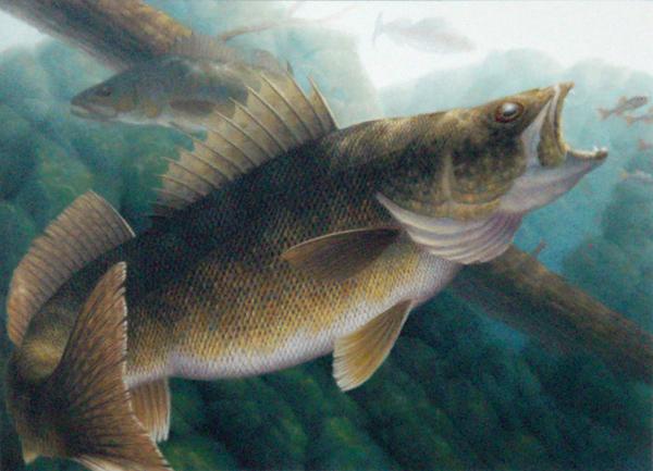 Walleye paintings for Wall eye fish